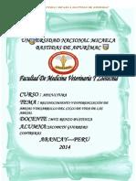 INFORME DE APICULTURA.docx