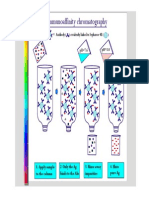 Week 7 Immunoaffinity Chromatography