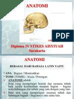 Anatomi P1 + KB