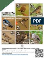Aves de Chile AR soporte