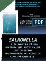 Salmonella Toxinuevo