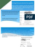 Shotgun Sequencing (Secuenciacion Escopeta).pptx