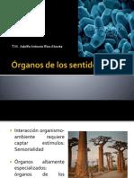 07Órganos de Los Sentidos 2014 Corregido