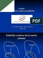 Lengua Articulación temporomandibular