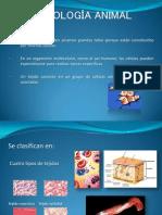 Histología Animal