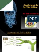 Anatomia de La Vía Biliar