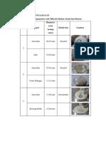 laporan praktikum antimikroba
