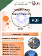 agricultura geral- pragas do algodoeiro.pptx