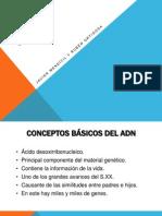 ADN por Rubén Ortigosa y Javier Mendívil