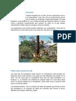 Ecosistema Fabrizzio