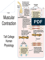 10 Muscular Contraction