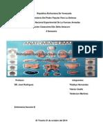 Trabajo de Anatomia Humana (1)