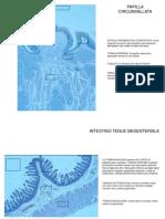 Presentazione Di Anatomia Microscopica