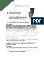 DICTYOCAULUS ARNFIELD