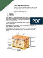 Fisiologia Del Cabello