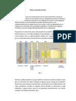 Baleo.pdf