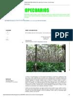 Temas Agropecuarios_ El Cultivo de La Cúrcuma