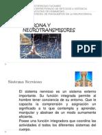 Neuronas y Neurotransmisores.