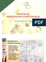 Praktikum Streptococcus sp