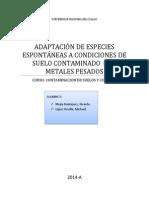 ADAPTACIÓN DE ESPECIES ESPONTÁNEAS A CONDICIONES DE SUELO CONTAMINADO  CON METALES PESADOS