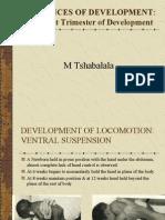 First Trimester of Development