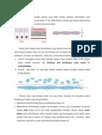 mikrofilamen.docx