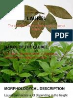 Laurel, Maider Gonzalez