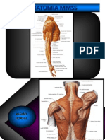 Anatomia Mmss PDF