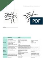 Dengue y Chincungunlla