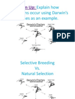 natural selection vs selective breeding pp