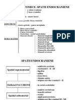 SCHEME Neurochirurgie