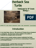 leatherback sea turtle webquest