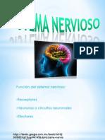 Sistema Nervioso.eve