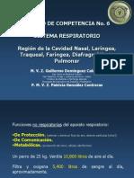 Región de La Cavidad Nasal, Laríngea, Traqueal, Faríngea, Diafragmática, Pulmonar