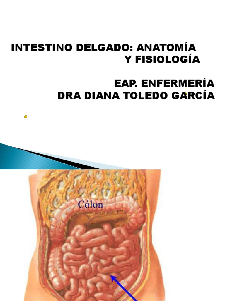 3 intestinoDelgado.ppt