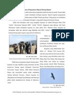 Serunya Pengamatan Migrasi Burung Raptor