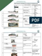 Guia de Cortes de Pescado