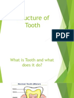 Structure and Position of Tooth and Teeth (Powerpoint)