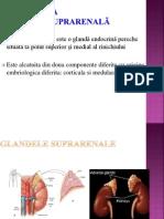 11. PATOLOGIA CORTICOSUPRARENALÃ 2- varianta scurta.ppt