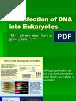 Transfection of Dna Into Eukaryotes