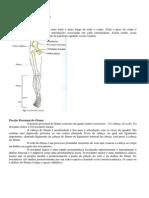 Anatomia Porção proximal fêmur e bacia.pdf