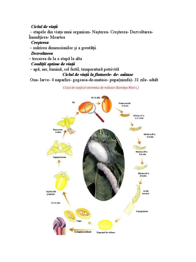 ciclul de viață al macroparaziților)