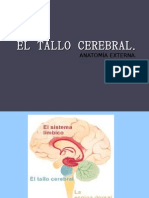 El Tallo Cerebral