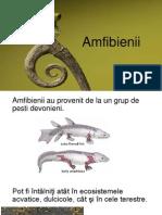 Amfibienii