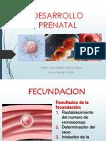 3 Desarrollo Prenatal (1)