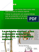 La médula espinal y las menínges medulares