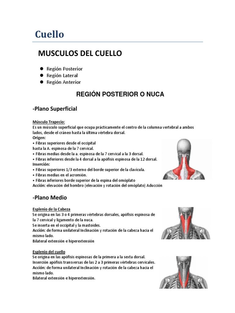 Músculos Del Cuello Resumen