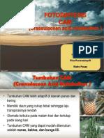 Fotosintesis CAM