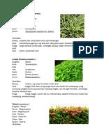 klasifikasi tumbuhan.doc