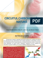Circuitul Carbonului În Natură